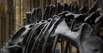 Dinosaur Bones Picture